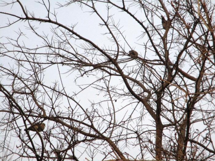3 doves.JPG