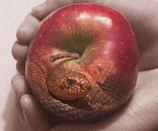 Snake_in_Apple.jpg