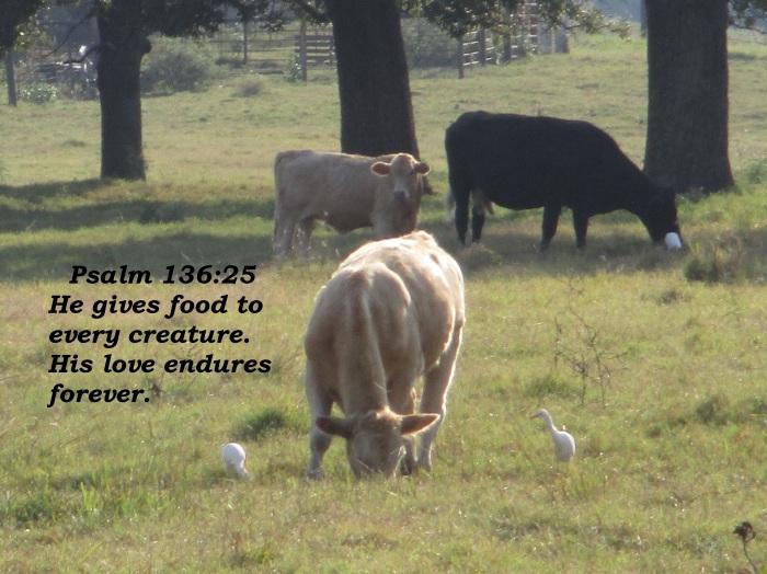 Psalm 136 25