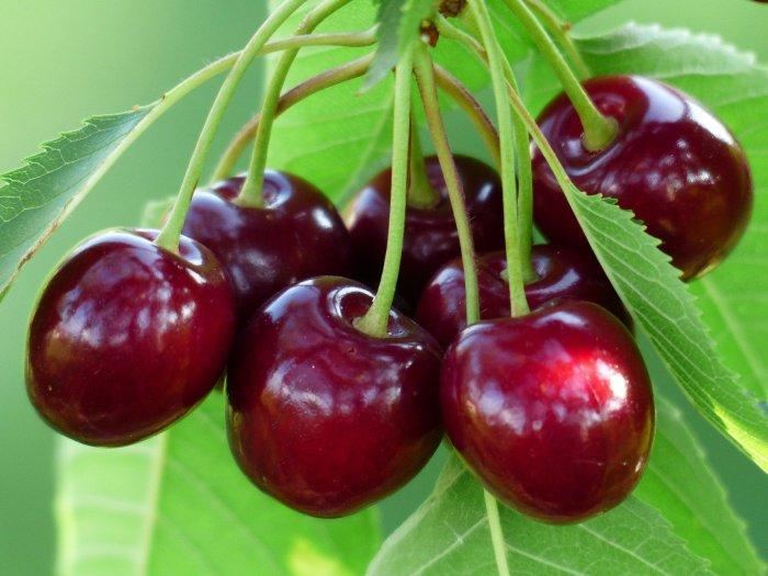 cherry-167341_19201706349011.jpg